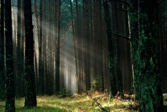 sunlight streaming through forest
