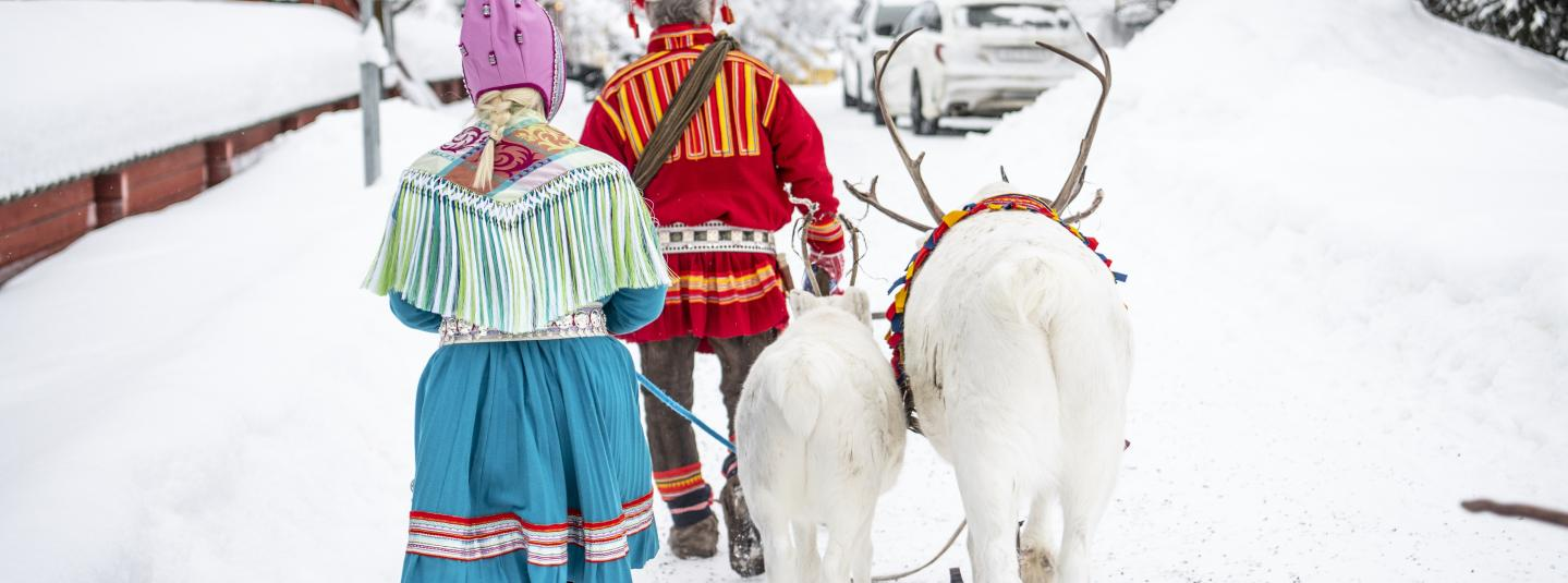 Reindeers and Sami people