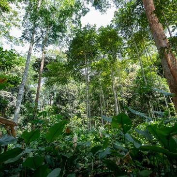 Photo of a tropical forest in Gabon